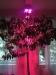 Ledcont Baum unter Led´s 4