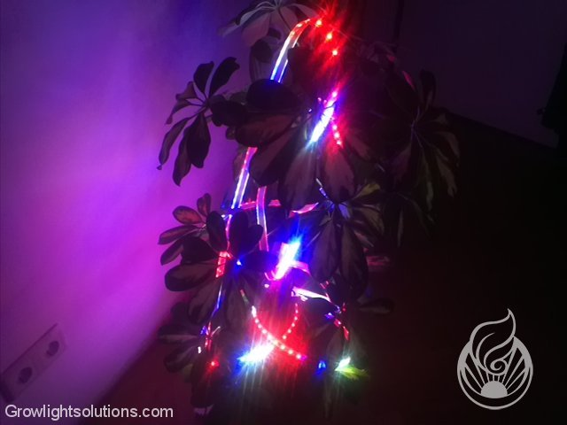 FLEXIBLE FLORA LEDS VON LEDCONT
