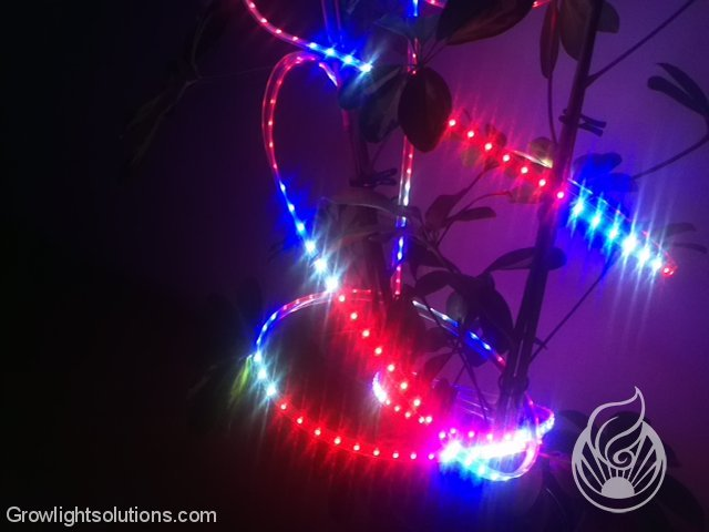 FLEXIBLE FLORA LEDS VON LEDCONT 5