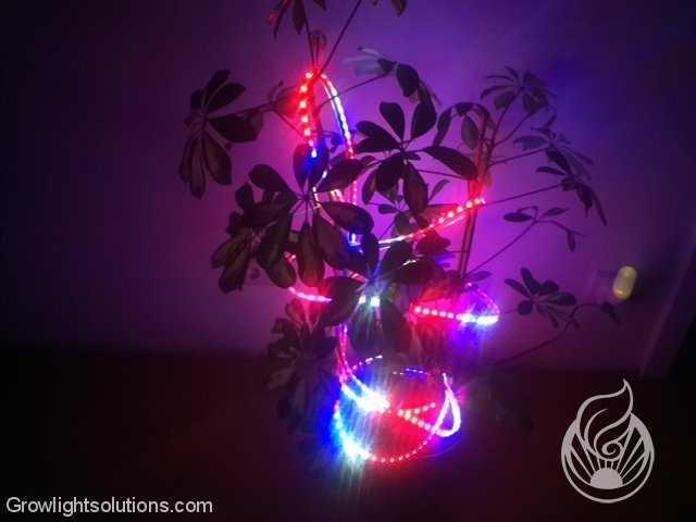 FLEXIBLE FLORA LEDS VON LEDCONT 7