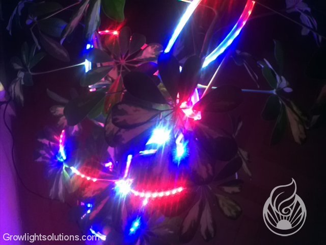 FLEXIBLE FLORA LEDS VON LEDCONT 8