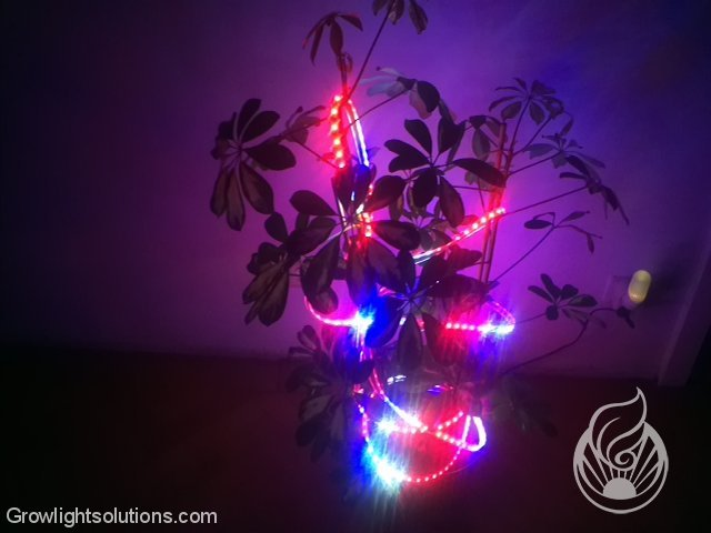 FLEXIBLE FLORA LEDS VON LEDCONT 9