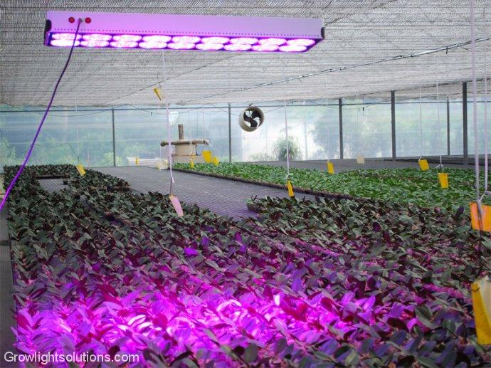 led growlight das richtige licht f r ihre pflanzen. Black Bedroom Furniture Sets. Home Design Ideas
