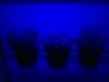 LEDkraeuterecke_Wachstum