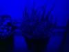 LEDkraeuterecke_Wachstum1