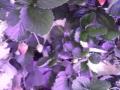 Minigarden Austria - Ledcont - Organic Power - Erdbeer Greenwall