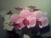 Led Orchideen12