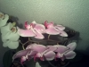 Led Orchideen13