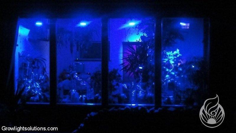 Growlight SolutionsPATRIKS ORCHIDEEN POWERED BY LEDCONT  Growlight