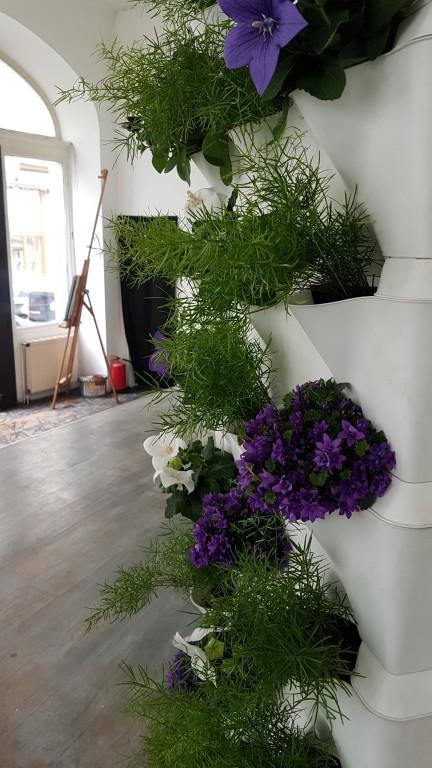 growlight solutionspflanzen led beleuchtungs blog. Black Bedroom Furniture Sets. Home Design Ideas