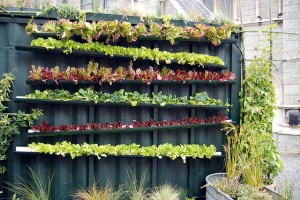 Stadt, Urban, farming, gemüseanbau