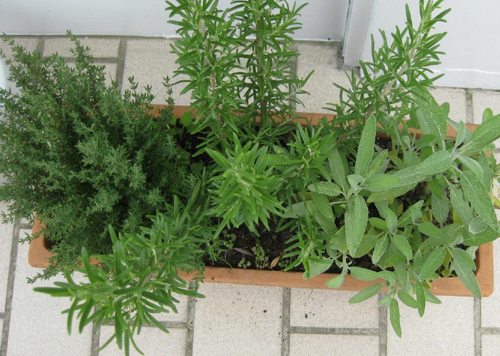 growlight solutionsblog posts cityfarming urbanfarming led pflanzen. Black Bedroom Furniture Sets. Home Design Ideas